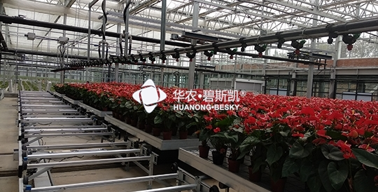 Potted Planting Factory-Henan Project