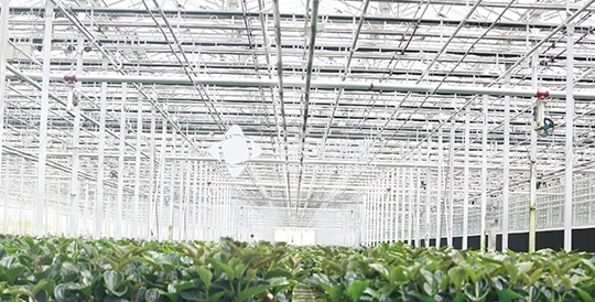 Potted Planting Factory-Tianjin Project
