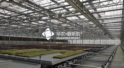 工厂化育苗-上海项目